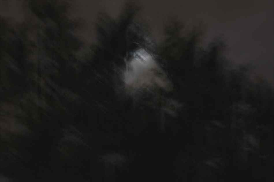 Moonlit night in the woods