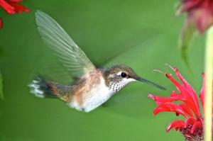 Backyard Birds 052