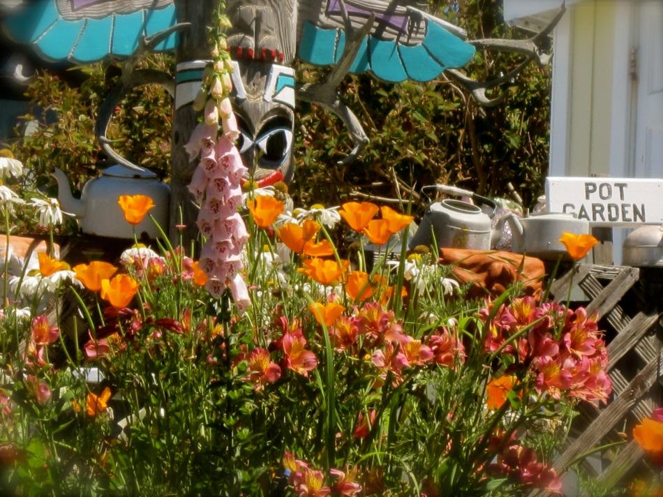 Sonoma County 2013 163