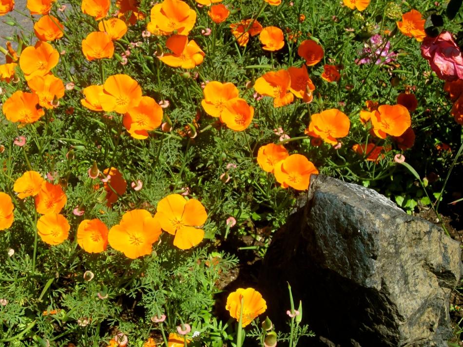 Sonoma County 2013 165