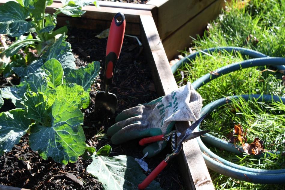 Gardening as meditation.