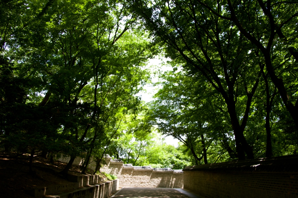 Road to the forbidden garden, Seoul, South Korea.