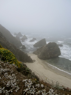 Misty morning, Bodega Head, California