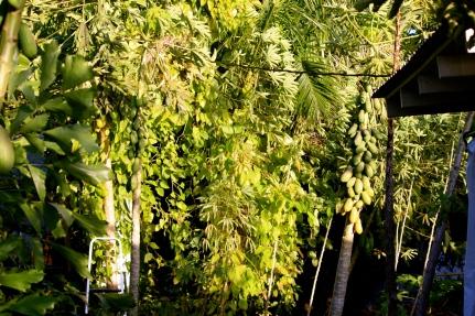 Florida 2010 Sabine 448