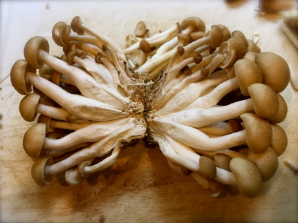 Beech Mushrooms