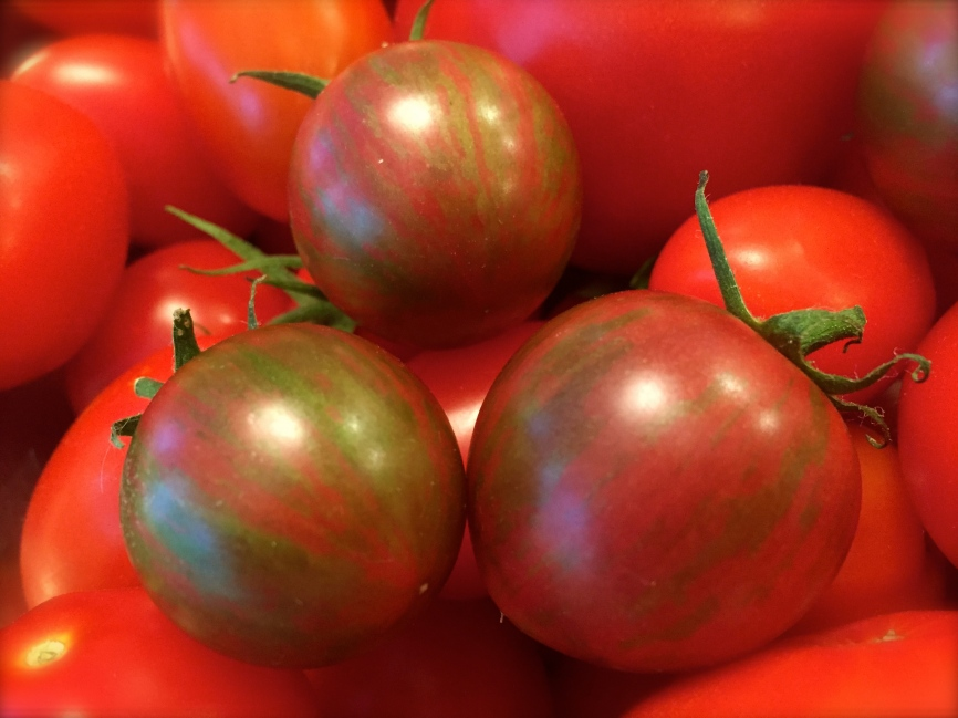 Bumblebee Tomatoes