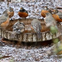 Meditation in Moments ... Robins of the Round Table