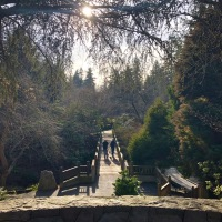 Oregon's Nature Nooks: Crystal Springs Rhododendron Garden